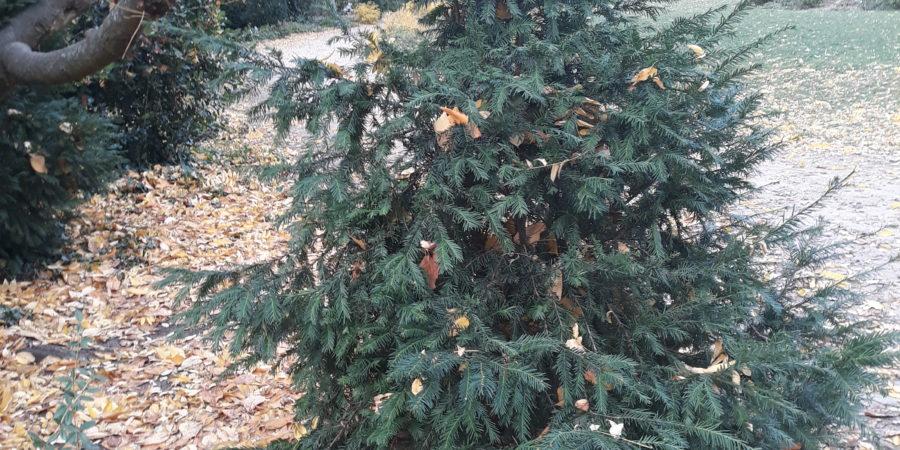 Geschichte Weihnachtsbaum.Weihnachtsbaum Und Schwingungserhohung Der Erde